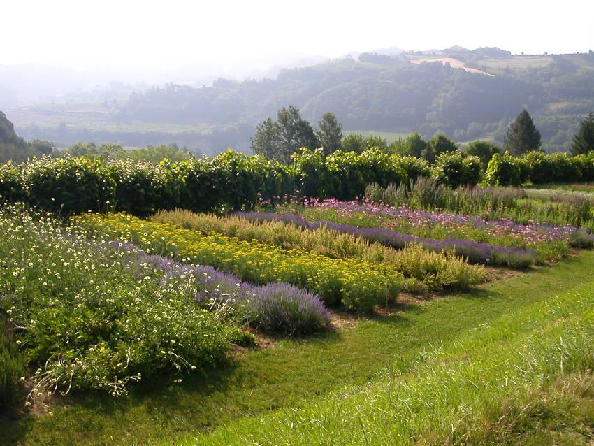 Giardino Delle Erbe Herb Garden In Casola Valsenio